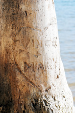 Heart Carved In Tree With Love...