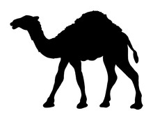 Camel Simple Graphic Icon. Black Arabic Sign Isolated On White Background. Camel Symbol Of Desert. Vector Illustration.