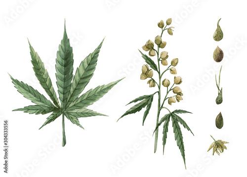 Beautiful watercolor medical marijuana illustration Wallpaper Mural