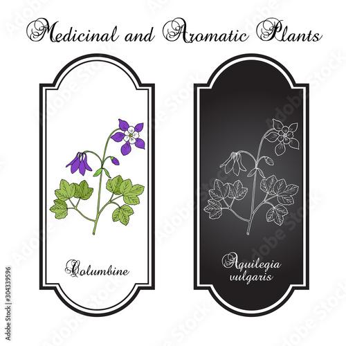Canvas Columbine aquilegia vulgaris , or granny s bonnet, medicinal plant