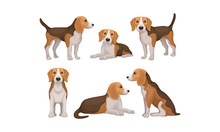 Detailed Beagle Dog In Differe...