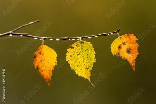 Herbst #304359963