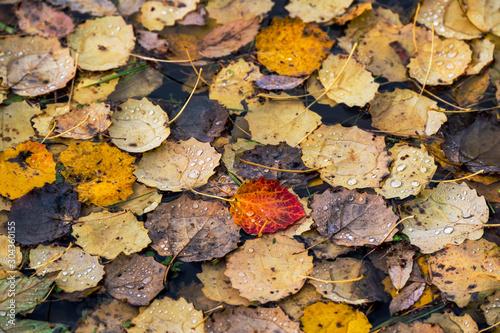Herbst #304360155