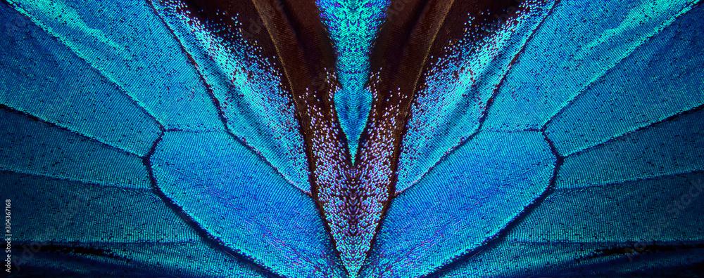Fototapeta Wings of a butterfly Ulysses. Wings of a butterfly texture background. Butterfly wings ornament.
