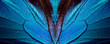 Wings of a butterfly Ulysses. Wings of a butterfly texture background. Butterfly wings ornament.