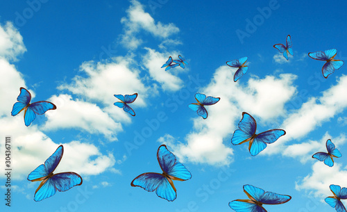 Fotografie, Obraz  bright butterflies flying in the blue sky with clouds