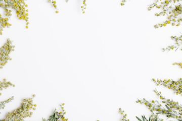 Medicinal herbs, Sagebrush, Artemisia, mugwort on a white background.