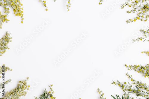 Photo  Medicinal herbs, Sagebrush, Artemisia, mugwort on a white background