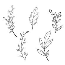 Floral Decoration Branch Leaf Plant Line