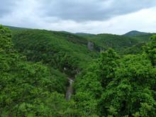 Forest Motsameta