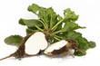 Zuckerrübe Beta vulgaris augeschnitten freigestellt auf weißem Hintergrund