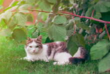 Gray The Beautiful  Cat Is Exp...