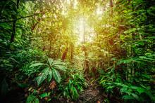 Basse Terre Jungle In Guadeloupe