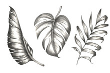 Set Of Palm And Banana Leaves With Tropical Flowers. Tropical Design In Pencil.