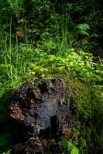 Green Clover On A Tree Trunk D...
