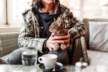 Cute, Striped Cat In Pet Frien...