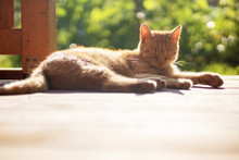 Ginger Cat Lying And Resting Outside On Terrace, Sunny Day