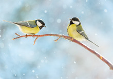 Two Great Tits On A Branch On A Sunny Winter Snowy Day. New Year Card.