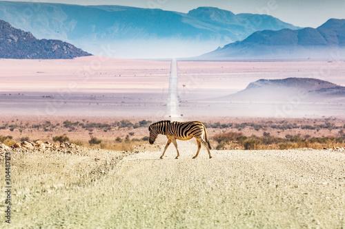 Zebry krzyżuje drogę, Namibia, Afryka