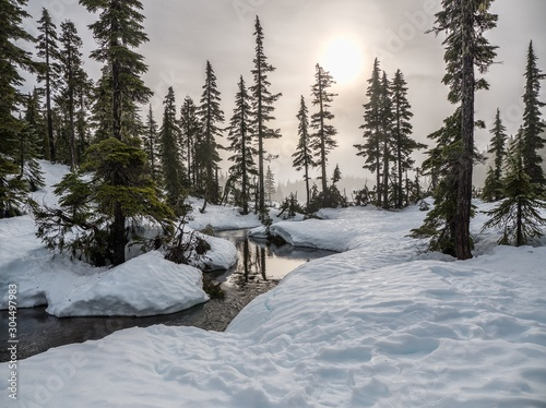 Fotobehang forest in winter