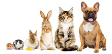 Rat And Hamster And Rabbit And Cat And Dog