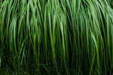 Close Up Of Lush Green Grass Blades