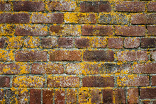 Close Up Of Red Brick Wall Overgrown With Yellow Lichen