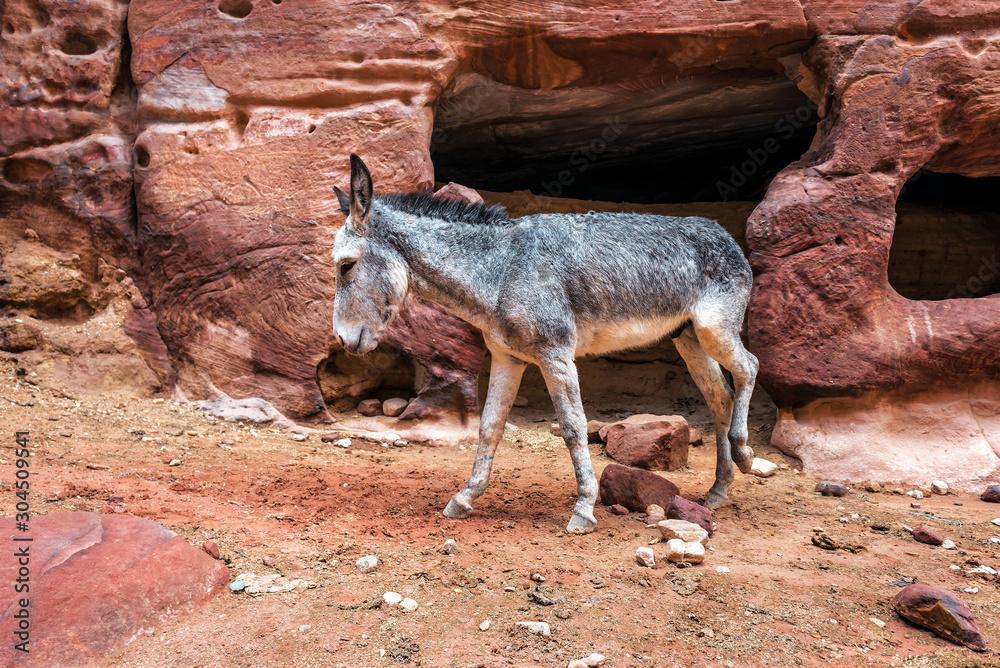 donkey among the red rocks