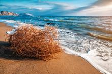 Dry Tumbleweed On The Sea Beach