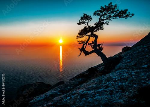 Obraz silhouette of alone juniper tree - fototapety do salonu