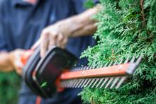 Gardener Trimming Overgrown Gr...
