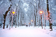 Evening Park After Snowfall