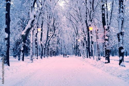 Foto auf AluDibond Rosa hell evening park after snowfall