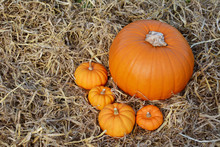 Four Autumnal Mini Pumpkins With A Large Pumpkin