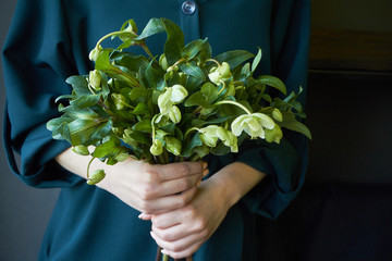 Close-up of a woman in a green dress holding a bouquet of fresh blooming hellebore flowers, selective focus