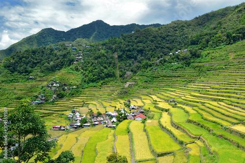 Obraz na plátně Rice terraces in Batad in Ifugao province, Luzon, world heritage
