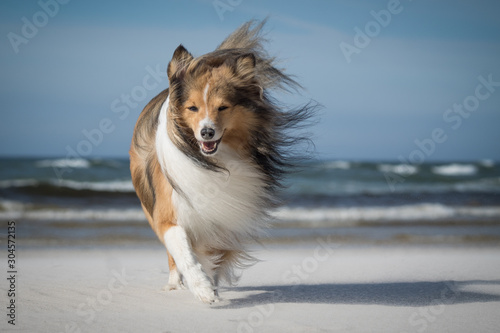 dog on the windy beach Fototapete