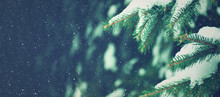 Winter Holiday Evergreen Christmas Tree Pine Branches Covered With Snow And Falling Snowflakes, Horizontal
