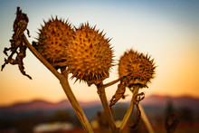 Dried Seed Pods At A Pumpkin P...