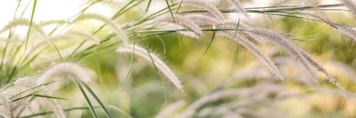 Beautiful grass flowers in the fields