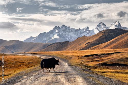 Foto op Plexiglas Grijs Yak in the mountain valley