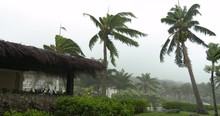 Strong Winds Lash Palm Trees A...