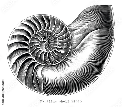 Antique engraving illustration of Nautilus shell hand draw black and white clip Fototapet