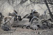Vulture Feeding Frenzy