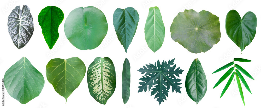 Fototapety, obrazy: Different tropical leaves on white background