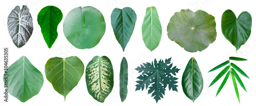 Obraz Different tropical leaves on white background - fototapety do salonu