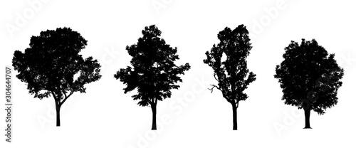Foto auf Leinwand Weiß coniferous tree silhouettes isolated on white background