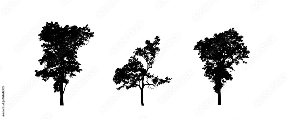 coniferous tree silhouettes isolated on white background
