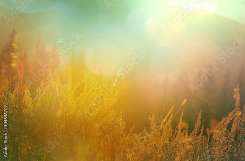 Montage in der Fensternische Honig Autumn meadow