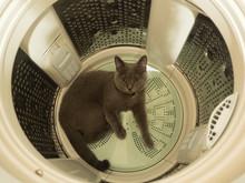 Cat In A Washing Machine
